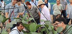 農業指導事業